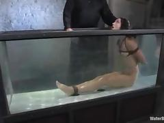 Honey gets suspended and dipped in the water tank