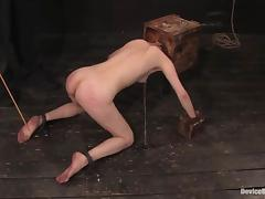 Calico gets her vag fisted and fucked with a dildo in BDSM vid