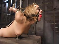 BDSM video with blonde Jolene getting hog tied and toyed