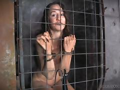 bitch captive in a cage